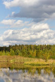 Autumn forest landscape Royalty Free Stock Photography