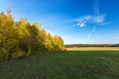 Autumn forest landscape Stock Images