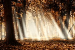 Autumn forest landscape. Royalty Free Stock Photography