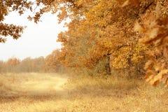 Autumn Forest Landscape royalty-vrije stock afbeeldingen