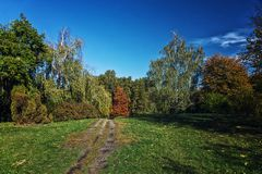 Autumn forest landscape against blue sky with a path. In the middle Stock Photography