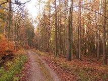 Autumn forest landscape. Golden Polish autumn. Nature concept royalty free stock photo