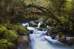 Autumn Forest Landscape With Beautiful Falling Cascades Of Creek And And Colored Leaves On The Stones. Milford Sound. stock photo