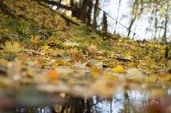 Autumn forest landscape with deep bokeh and reflection . royalty free stock photo