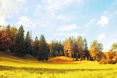 Autumn forest landscape - dense forest trees in the sunny forest autumn valley Stock Photography