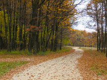 Autumn forest landscape with endless country road Royalty Free Stock Photos