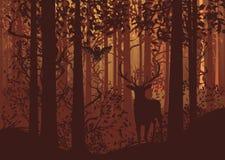 Autumn Forest Landscape et cerfs communs Photo stock