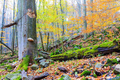 Autumn forest. Stock Image