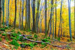 Autumn forest. Royalty Free Stock Photos