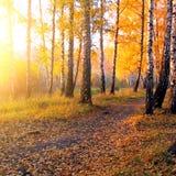 Autumn Forest Stock Photo