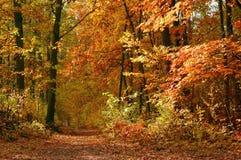 Autumn Forest Landscape Stock Photo
