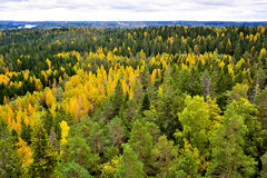 Autumn forest landscape II. Forest trees in autumn landscape Royalty Free Stock Photography