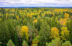 Autumn forest landscape III. Forest trees in autumn landscape Stock Photography