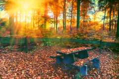 Autumn forest landscape with lonely picnic place at fall sunset Stock Images