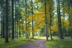 Autumn forest landscape with path. Colorful autumn forest landscape with path Stock Photos