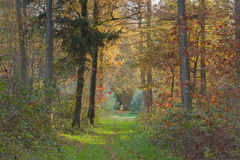 Autumn forest landscape with pathway in the middle Stock Photo