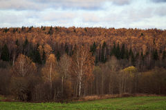 Autumn forest landscape with sky and colorful trees. Toned Royalty Free Stock Images