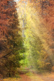Autumn forest landscape Royalty Free Stock Image
