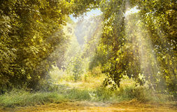 Autumn forest landscape with sun rays stock images