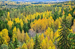 Autumn forest landscape. Forest trees in autumn landscape Royalty Free Stock Photo