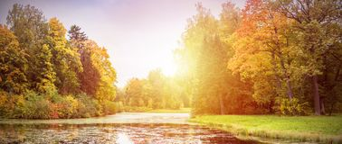 Trees with yellow. Autumn forest landscape. Trees with yellow leaves and lake. Panorama of colorful autumn nature Stock Photography