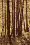 Autumn forest landscape in warm tone. Nobody Royalty Free Stock Photos