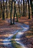Autumn forest landscape Stock Image