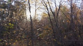 Autumn forest landscape from the window of a moving car or train. The camera moves past trees, birch, pine, aspen covered with yellow and red leaves. The sun`s stock video
