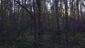 Autumn forest landscape from the window of a moving car or train. The camera moves past trees, birch, pine, aspen covered with yellow and red leaves. The sun`s stock video footage