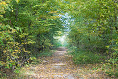 Autumn forest landscape Royalty Free Stock Photos