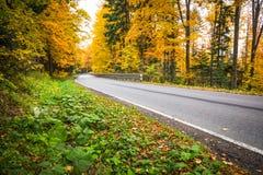 Autumn forest landscape-yellowed autumn trees and fallen autumn Royalty Free Stock Photos