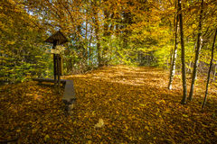 Autumn forest landscape-yellowed autumn trees and fallen autumn Royalty Free Stock Photo