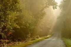 Autumn forest lane with rays of early sun Royalty Free Stock Photos