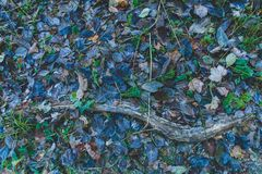Autumn forest leaves blue green snow frozen Stock Photos