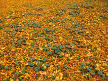 Autumn forest leaves fallen down the earth Royalty Free Stock Photography