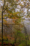 Autumn forest Leaves. Fog and Colorful Autumn forest Leaves Stock Photo