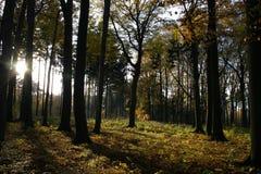 Autumn Forest Light royalty-vrije stock afbeeldingen