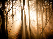 The autumn forest Royalty Free Stock Image