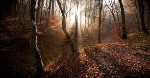 The autumn forest Stock Image