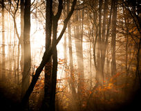 The autumn forest Royalty Free Stock Photography