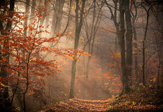 The autumn forest Royalty Free Stock Images