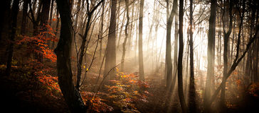 The autumn forest Stock Photography