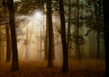 Autumn forest with lights Stock Images