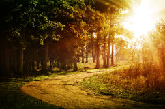 Free Autumn Forest, Lit By The Sun Royalty Free Stock Photos - 62002678