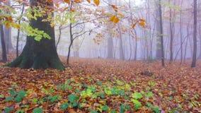 Autumn Forest lluvioso en Siebengebirge Alemania almacen de video