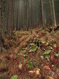 Autumn Forest Located lunatico nelle colline Erba rossa con le foglie verdi immagini stock
