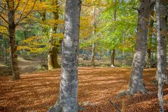 Autumn forest. At Mata da Albergaria, Geres National Park, Portugal stock photo