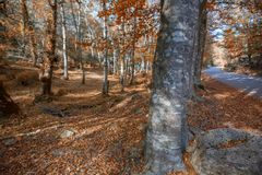 Autumn forest. At Mata da Albergaria, Geres National Park, Portugal royalty free stock photography