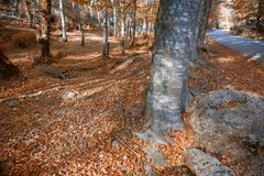 Autumn forest. At Mata da Albergaria, Geres National Park, Portugal stock images