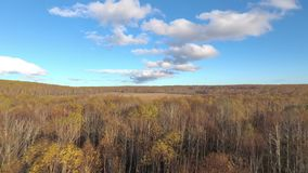 Autumn forest and meadow with blue sky. Autumn forest and meadow with clouds on blue sky aerial stock footage